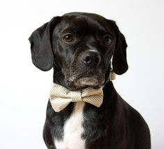 Bow Tie Dog Collar! What a fantastic idea!