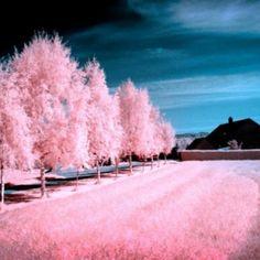 Una colección de fotos tomadas con algun filtro infrarrojo #arte #colores #fotografia #fotografia infrarroja #fotos #infrarroja