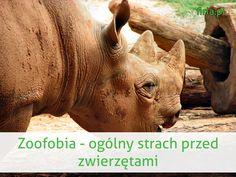 zoofobia to strach przed zwierzętami www.firia.pl