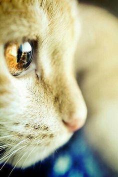 고양이 눈을 옆에서 보면 이렇게 생겼다냥 >_< 정말 보석같은 눈동자다냥 /ㅅ/