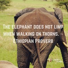 African proverbs The elephant does not limp when walking on thorns. ~ Ethiopian Proverb