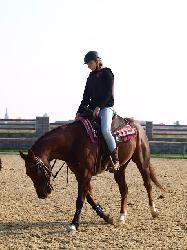 Top Jolly Brown Pad - Quarter horse - Koně na prodej