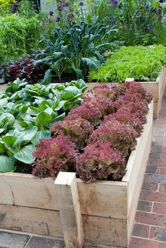 Raised Bed Vegetable Garden in Backyard.  Beautifully done.