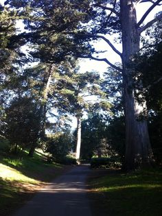 Golden Gate Park #sanfrancisco Golden Gate Park, San Francisco, Country Roads