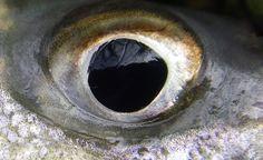 Eye Spy a Striper by moldychum, via Flickr