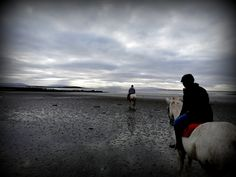Beach Rides, Winter Beach, Equestrian, Vacations, Ireland, Horses, Website, Water, Outdoor