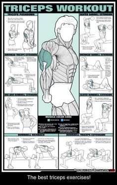 The best triceps exercises! the majority of your arm muscle is triceps, its the one to workout for big arms #triceps #workout