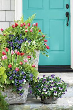 Tulips, Pansies, Acorus, Heuchera, Ivy and Fern
