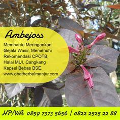 Tawk to obat wasir alami Wordpress Org, Planting Flowers, Benefit, Herbalism, Plants, Garden, Garten, Planters, Gardening