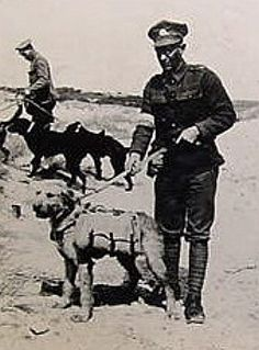 Airedale's were important messengers during war time.