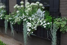 Window box in shades of green white: trailing white petunias, dichondra, dusty m. Window box in sh Container Flowers, Container Plants, Succulent Containers, Container Gardening Vegetables, Vegetable Gardening, Balcony Plants, Garden Windows, White Gardens, Plantation