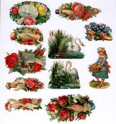 #Victorian #scrap #chromograph #lithograph (beautiful die cut sentiments) #crane #swan #floral #roses