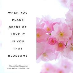 When you plant seeds of love it is you that blossoms #love