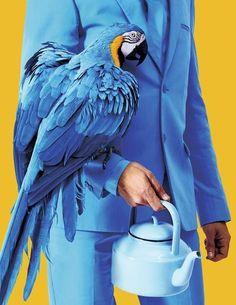 Beau bleu, bel assortiment avec ce perroquet ! Bleu attractif !