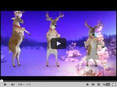 Santa and Reindeers - Merry Christmas