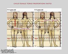 Child female torso proportions ratio