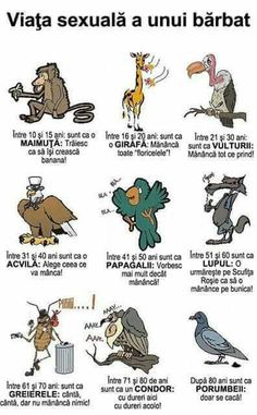 Funny Pictures, Jokes, Comics, Owl, Amazing, Humor, Fanny Pics, Husky Jokes, Funny Pics