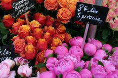 Roses and peonies (les pivoines)