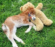 15 mini-caballos que son mucho más lindo que cualquier juguete reales