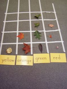 {leaf graph} I would use color matching cards for my students since they are younger.
