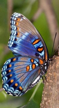 Red Spotted Purple Butterfly Art Print by Sandy Keeton. All prints are professionally printed, packaged, and shipped within 3 - 4 business days. Butterfly Effect, Butterfly Kisses, Purple Butterfly, Blue Butterfly, Butterfly Wings, Bird Wings, Morpho Butterfly, Blue Dragonfly, Blue Morpho