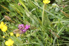 Orchidee uit de Snoekengracht. Flora, Plants, Plant, Planets