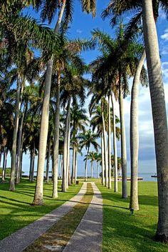 ˚Walkway to the Sea - Miami, Florida