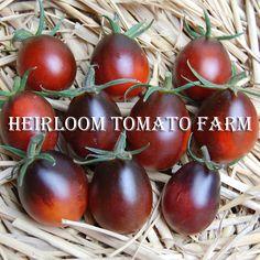 Blue Tomato INDIGO™'Ruby' F1 ブルートマト・インディゴ・ルビー・F1