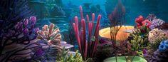 Underwater Scene Facebook Cover