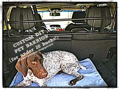 Hope Studios: DIY Pet Barrier for Under $20. Keep your dog in the back without spending a fortune!