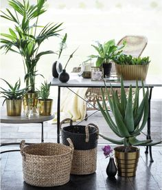 Earthy, tropical decor from H&M Home - Decoist