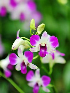 Pretty Little Pink & White Orchids