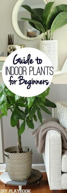 Indoor plant survival guide from the ladies of DIY Playbook