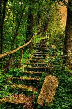 An Ancient Stair Beautiful World, Beautiful Places, Beautiful Stairs, Amazing Places, Beautiful Forest, Beautiful Scenery, Foto Nature, Nature Nature, Forest Path
