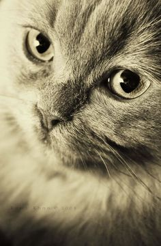 100 Cute Animal Photos That Make You Go AWWW