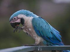 Cute Birds, Pretty Birds, Beautiful Birds, Exotic Birds, Colorful Birds, Conure Bird, Parrot Pet, Parakeets, Cockatoo
