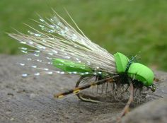 Cicada - been looking for a good pattern