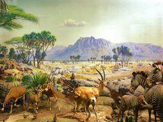 African Scenery | african landscape || afrikanische Landschaft | Flickr - Photo Sharing!