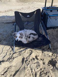 Australian shepherd on the beach Aussie Puppies, Cute Puppies, Cute Dogs, Dogs And Puppies, Doggies, Blue Merle, Australian Shepherd Dogs, Cute Little Animals, Cute Creatures