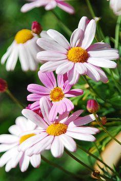 Dark and Light Pink Flowers