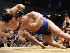 Sumo (相撲