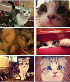 Meredith Taylor swift's cat....AWW...Meredith's a sweetie...I want a cat just like her!