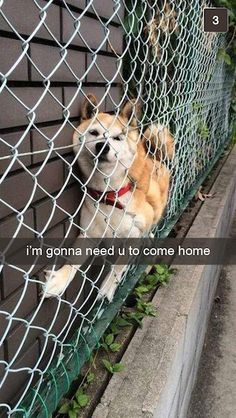 snapchat from dog, snapchat from dog fence, funny dog, dog stuck in fence, i'm gonna need u to come home