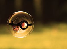 IT'S AN EEVEE IN A POKEBALL!!! I LOVE IT WAY TOO MUCH!!!!!!!!!!!!!!!!!!!