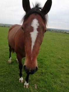 Twix enjoying an early Summer holiday. Horses For Sale, Ireland, Holiday, Summer, Vacations, Summer Time, Summer Recipes, Holidays Events, Irish