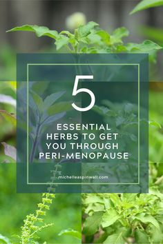 Do you suffer from anxiety or insomnia? Want to get clear skin and reduce acne? Did you know that these herbs for peri-menopause can clear acne skin, stop bloating, reduce anxiety and so much more including reducing peri-menopause symptoms. Find out about which other herbs help peri-menopause on the blog. Foods To Balance Hormones, How To Regulate Hormones, Balance Hormones Naturally, Post Menopause, Menopause Symptoms, How To Stop Bloating, Hormone Diet, Natural Diuretic, Female Hormones
