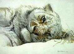 Robert Bateman Snowy Nap Tiger