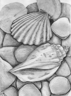 One of the popular drawings is Observational Drawing ideas. The phrase 'observational drawing' normally means drawing from life. Shell Drawing, Beach Drawing, Painting & Drawing, Learn Painting, Ocean Drawing, Drawing Drawing, Figure Painting, Easy Drawings Sketches, Pencil Art Drawings
