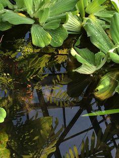 Serre plantes Ecosse