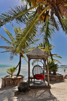 Tropical palms on the beach at Matachica Resort in Ambergris Caye, Belize.